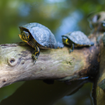 A free turtle traders forex expert advisor